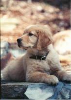puppic.jpg